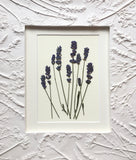 'Plaster Relief Frame with Pressed Lavender' By Botanical Art By Diane De Roo