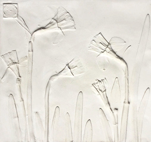 'Daffodil Square Botanical Cast' by Botanical Art by Diane De Roo