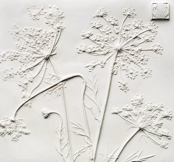 'Queen Anne's Lace Square Botanical Cast' by Botanical Art by Diane De Roo