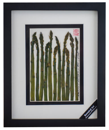 'Asparagus Vegetable Shadow Box' by Botanical Art by Diane De Roo