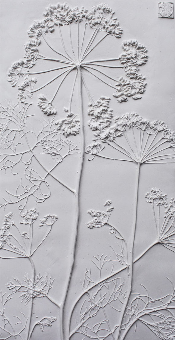 'Queen Anne's Lace Large Botanical Cast' by Botanical Art by Diane De Roo