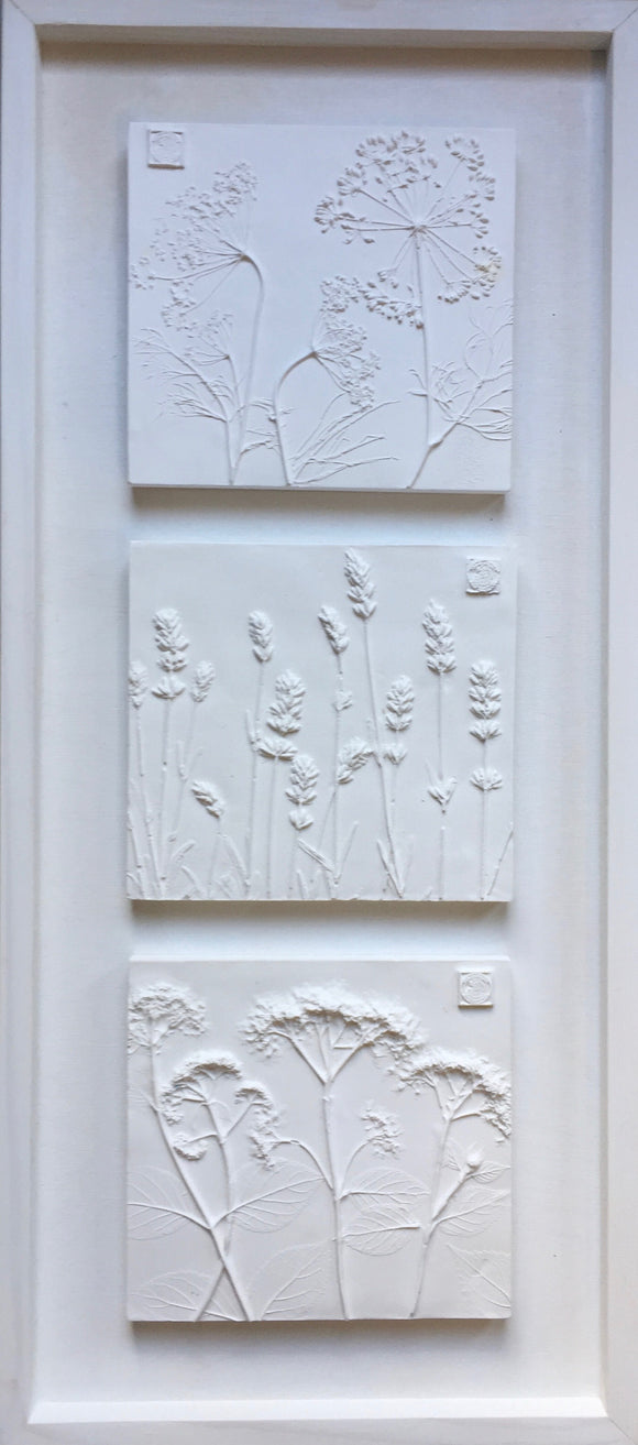 'Framed Botanical Trio - Cottage White' by Botanical Art by Diane