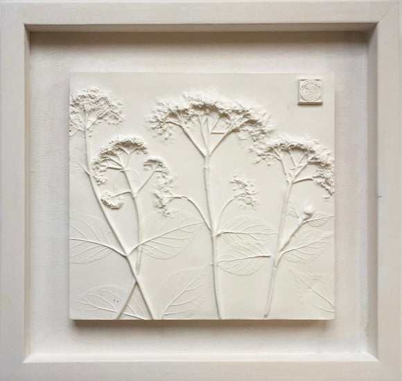 'Framed Botanical Casts - Cottage White'  by Botanical Art by Diane De Roo