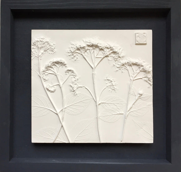'Framed Botanical Cast - Black Wash' by Botanical Art by Diane De Roo