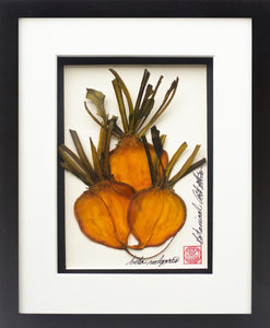 'Golden Beets Vegetable Shadow Box' by Botanical Art by Diane De Roo