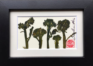 'Mini Broccoli Frame' by Botanical Art by Diane De Roo