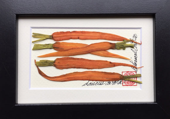 'Mini Carrot Frame' by Botanical Art by Diane De Roo