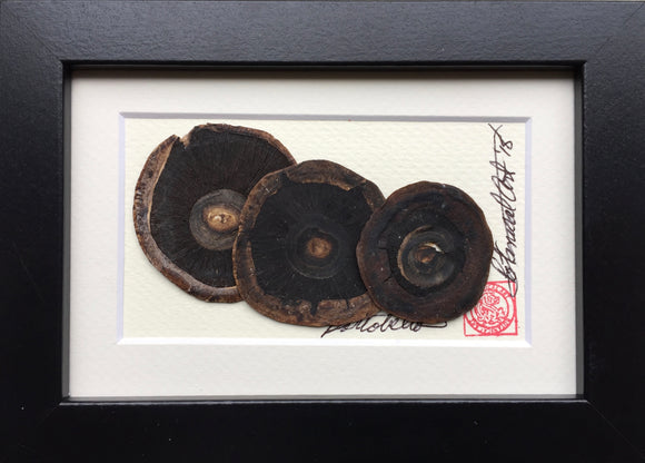 'Mini Portobello Mushroom' by Botanical Art by Diane De Roo