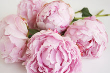 Load image into Gallery viewer, PEONY & BLUSH SUEDE