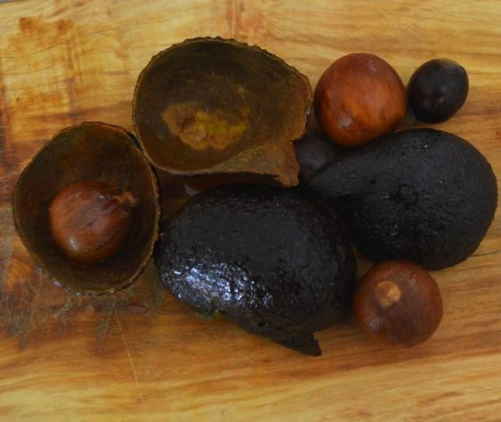 Getting Started with Natural Dyes: Avocado Dye