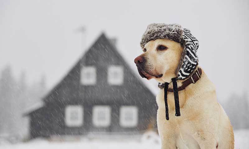 Keep Your Dog Active and Healthy This Winter