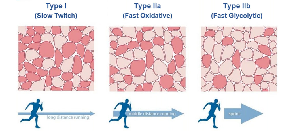 Muscle Twitching by Level of Oxygen Availability