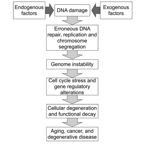 Process of genomic instability
