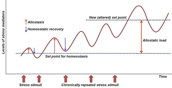 Cortisol as a biochemical marker of chronic stress