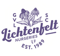 White Drift Rose 2&3 Gal | Lichtenfelt's