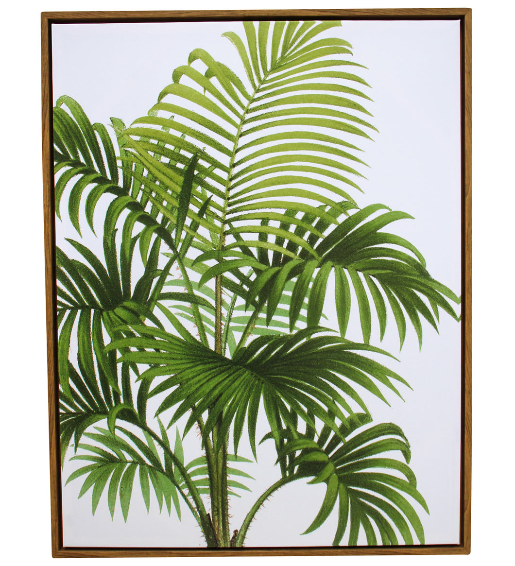 Framed Canvas Paradise Palm