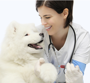 speech recognition for veterinary clinic