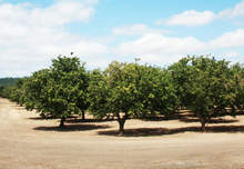 Load image into Gallery viewer, Freddy Guys Hazelnut Orchard