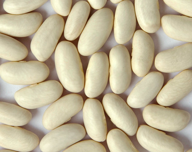 Heirloom Cannellini Beans