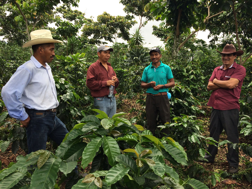 From Farm to Your Favorite Cup: The Harvest Cycle of Coffee