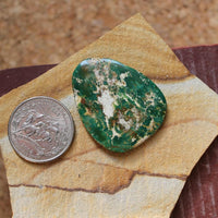 33.8 carat dark green Stone Mountain Turquoise flat-top cabochon - Nevada Cassidys