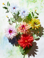 Load image into Gallery viewer, Dahlia Plant