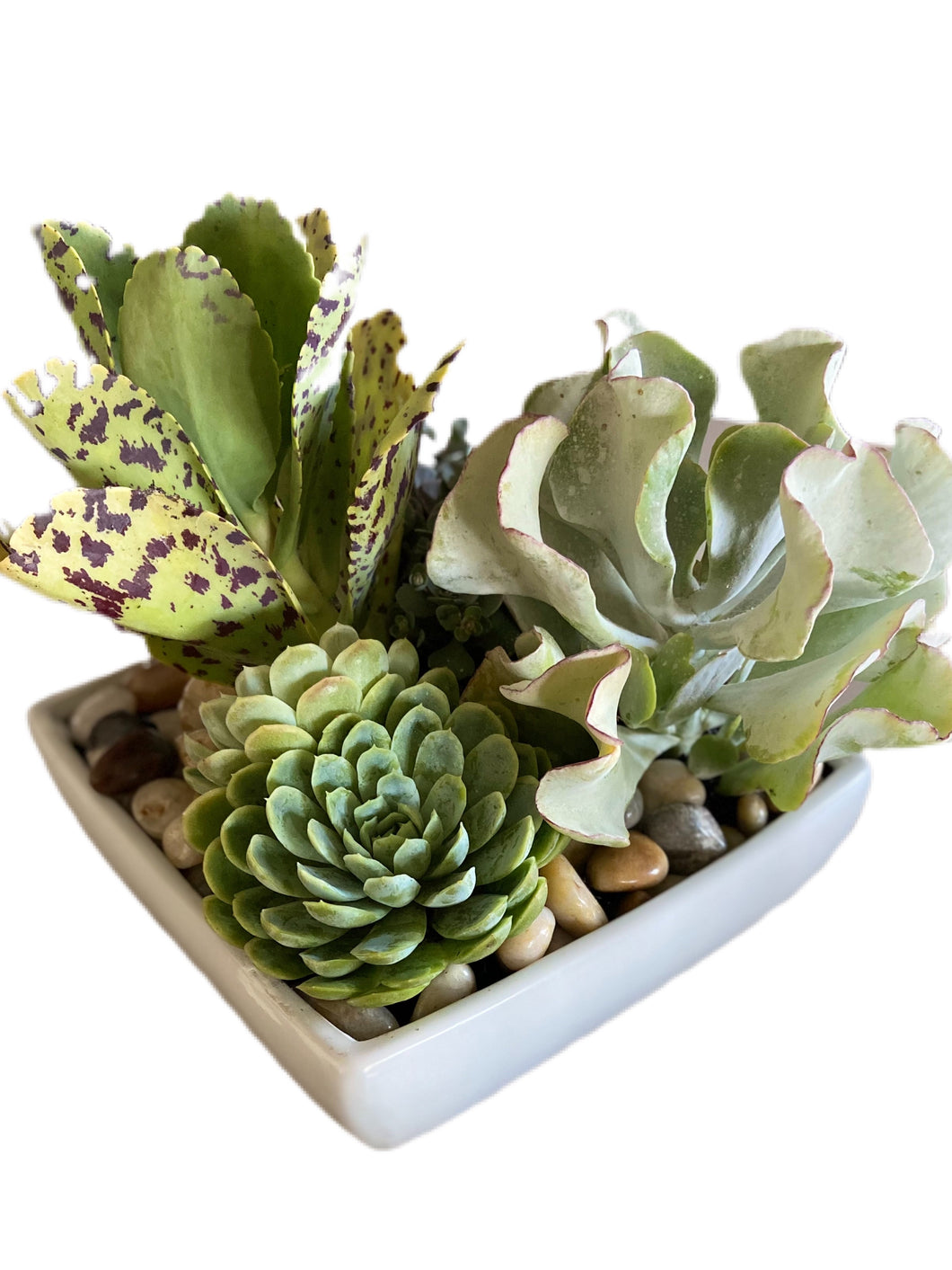 Succulent garden limited-edition 2