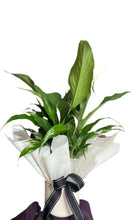 Load image into Gallery viewer, Mini Peace Lily