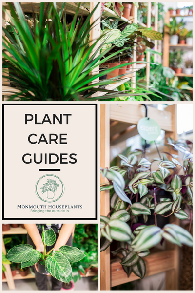 Plant Care Guides