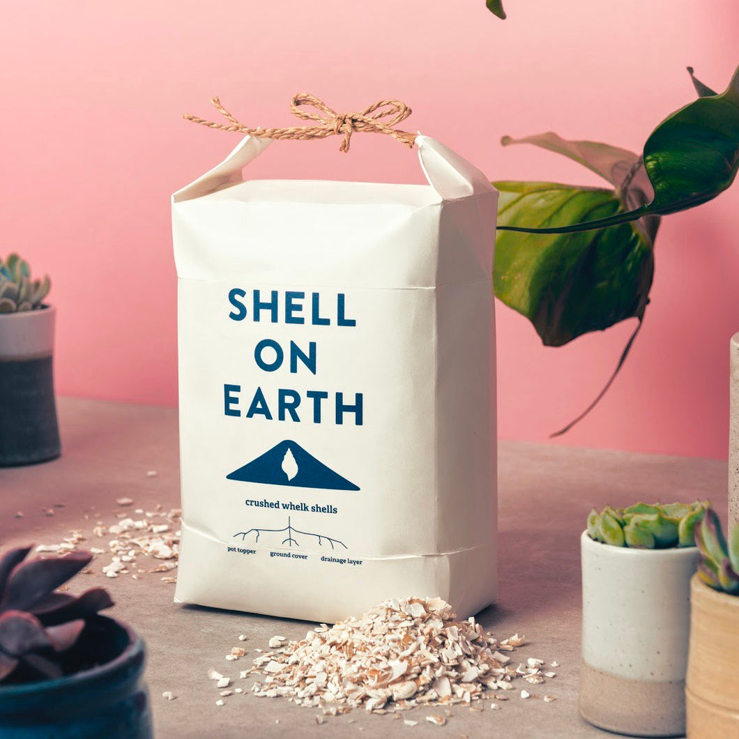 Shell on Earth - Whelk shells pot topper 3.5kg