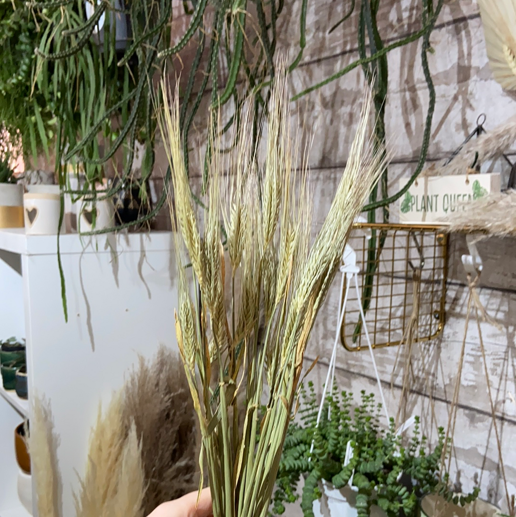 Dried Barley Bunch - 60cm natural blooms