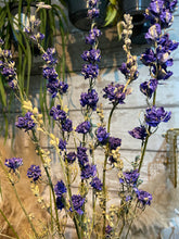 Load image into Gallery viewer, Dried Delphinium - Dried flowers bunch