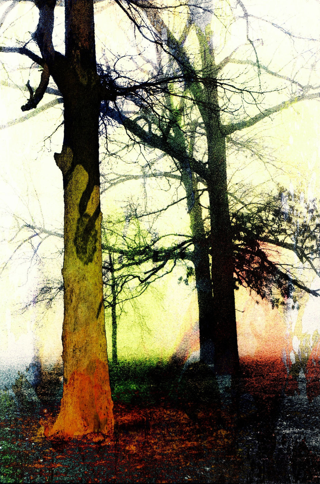 Trees in the fog # 2 abstract pop art print.