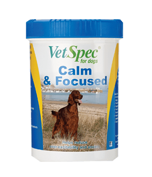 Calm & Focused Supplement
