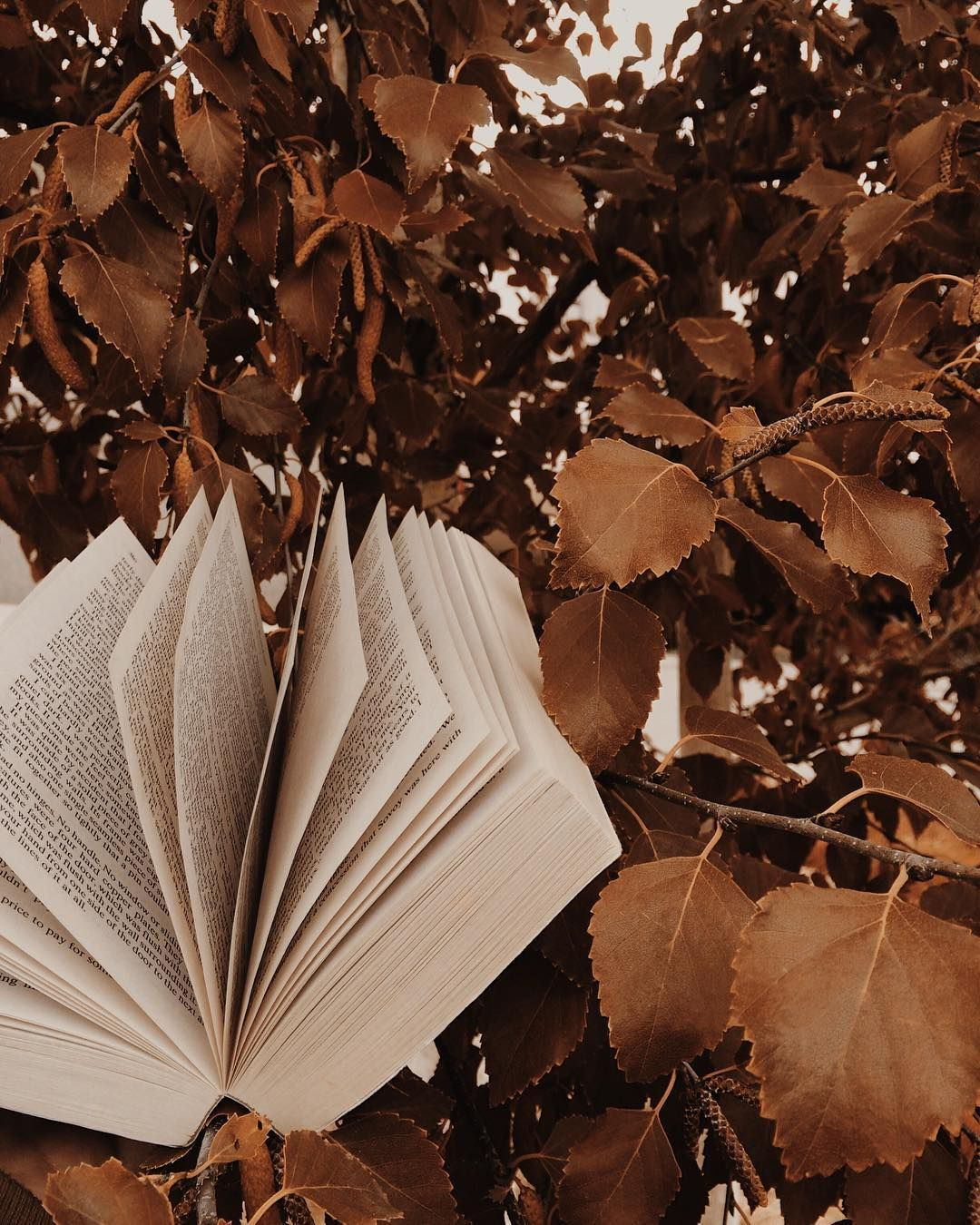 5 FALL BOOKS TO READ