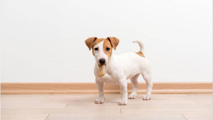 7 reasons your dog may eat poop and how to defer the behavior