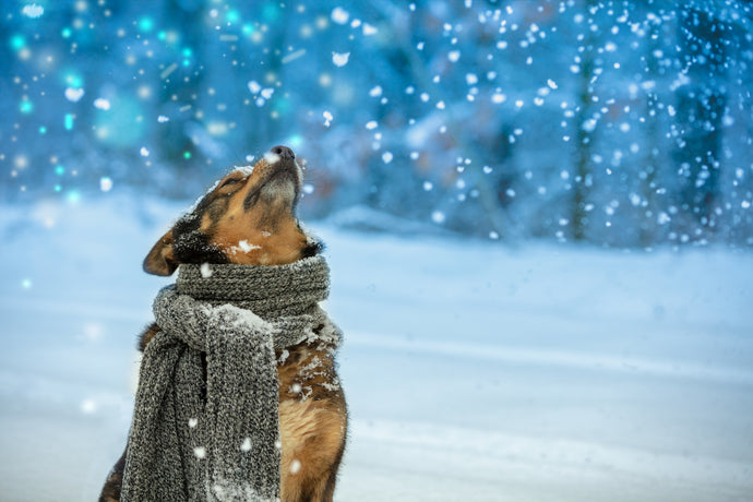 10 Dog Winter Safety Tips