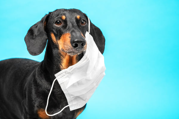 7 Simple Steps to Boost your Dogs Immune System!