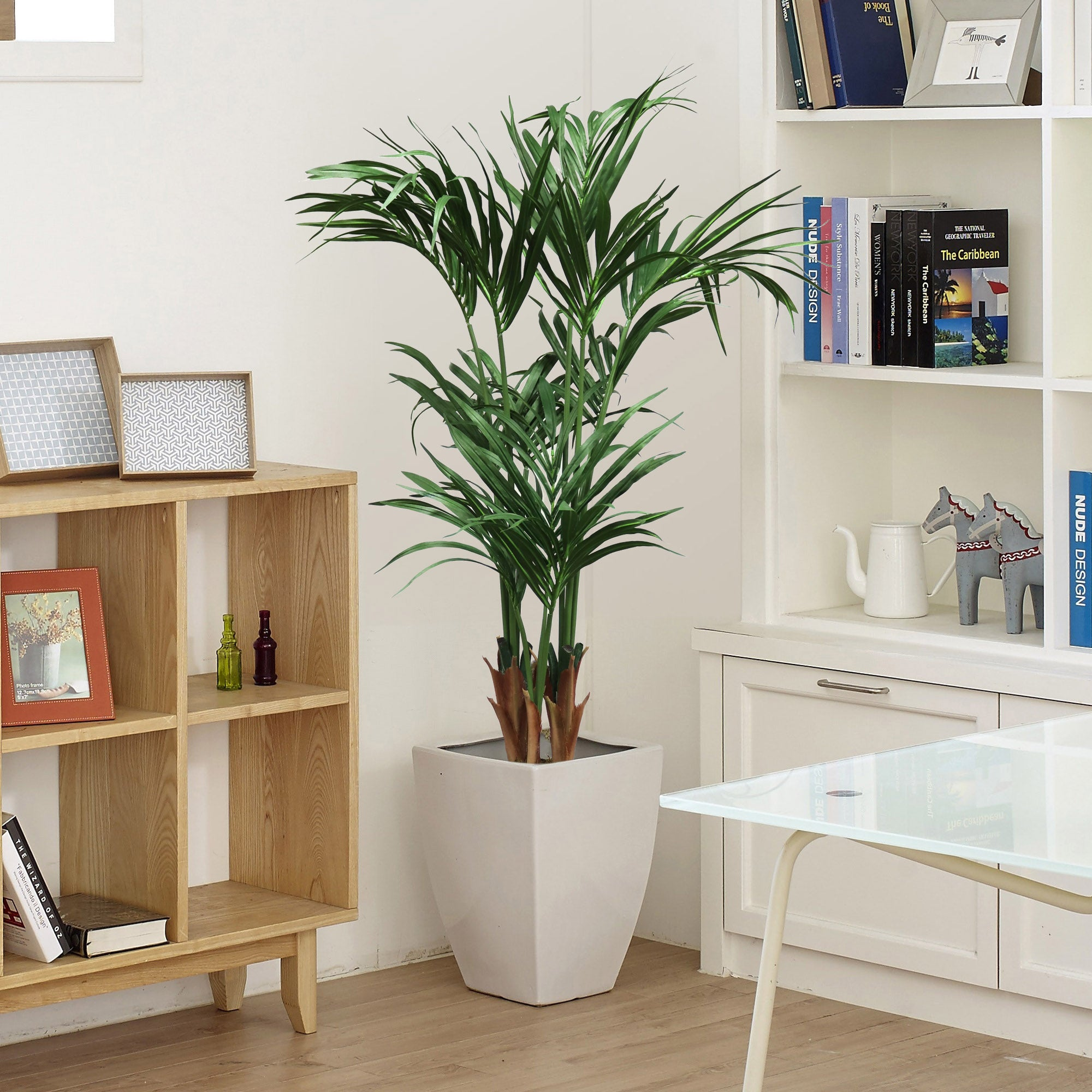 5.5' Areca Palm Tree  in Black Pot