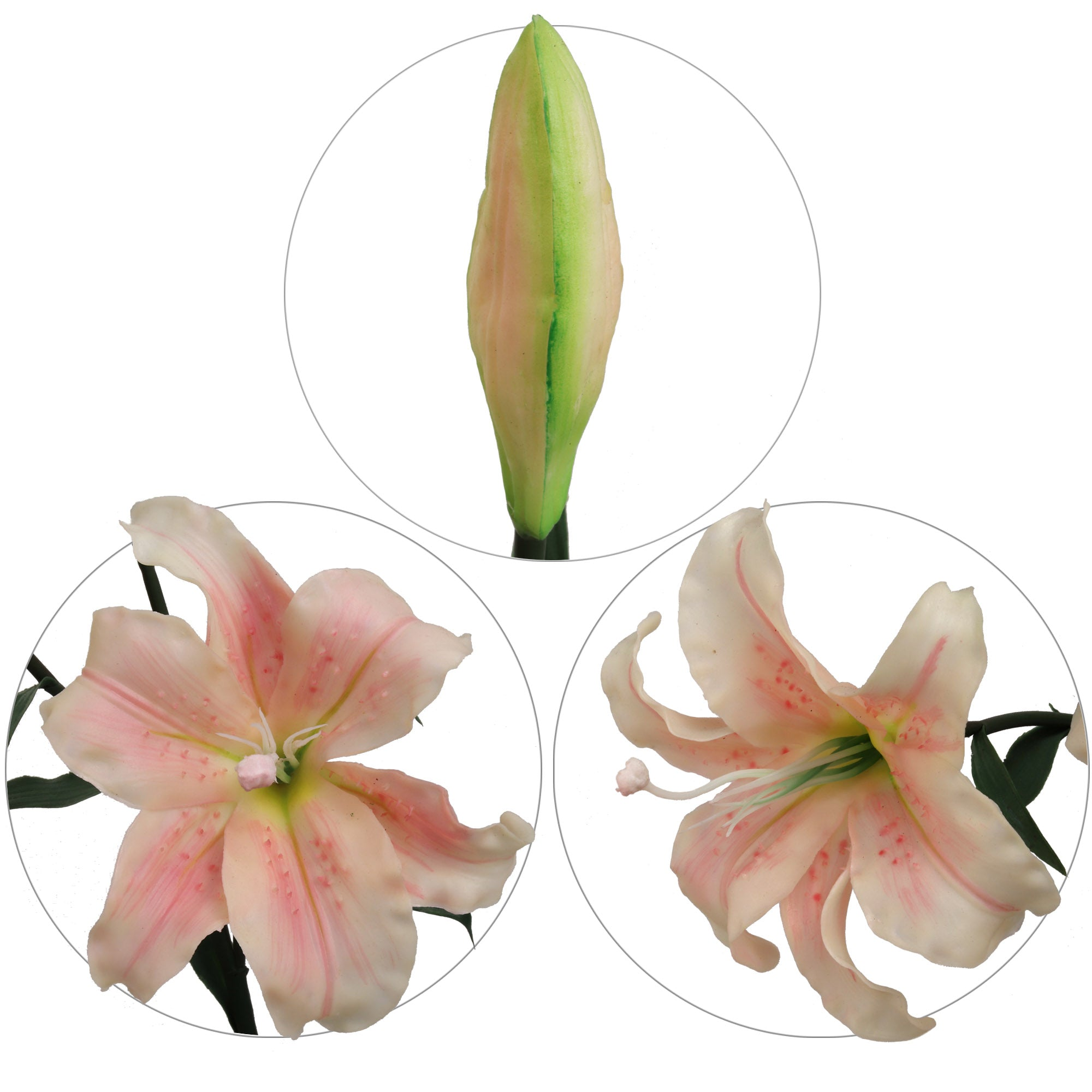 "Premium Real Touch Lily 35""  Two Pink White Blooms 1 Bud"