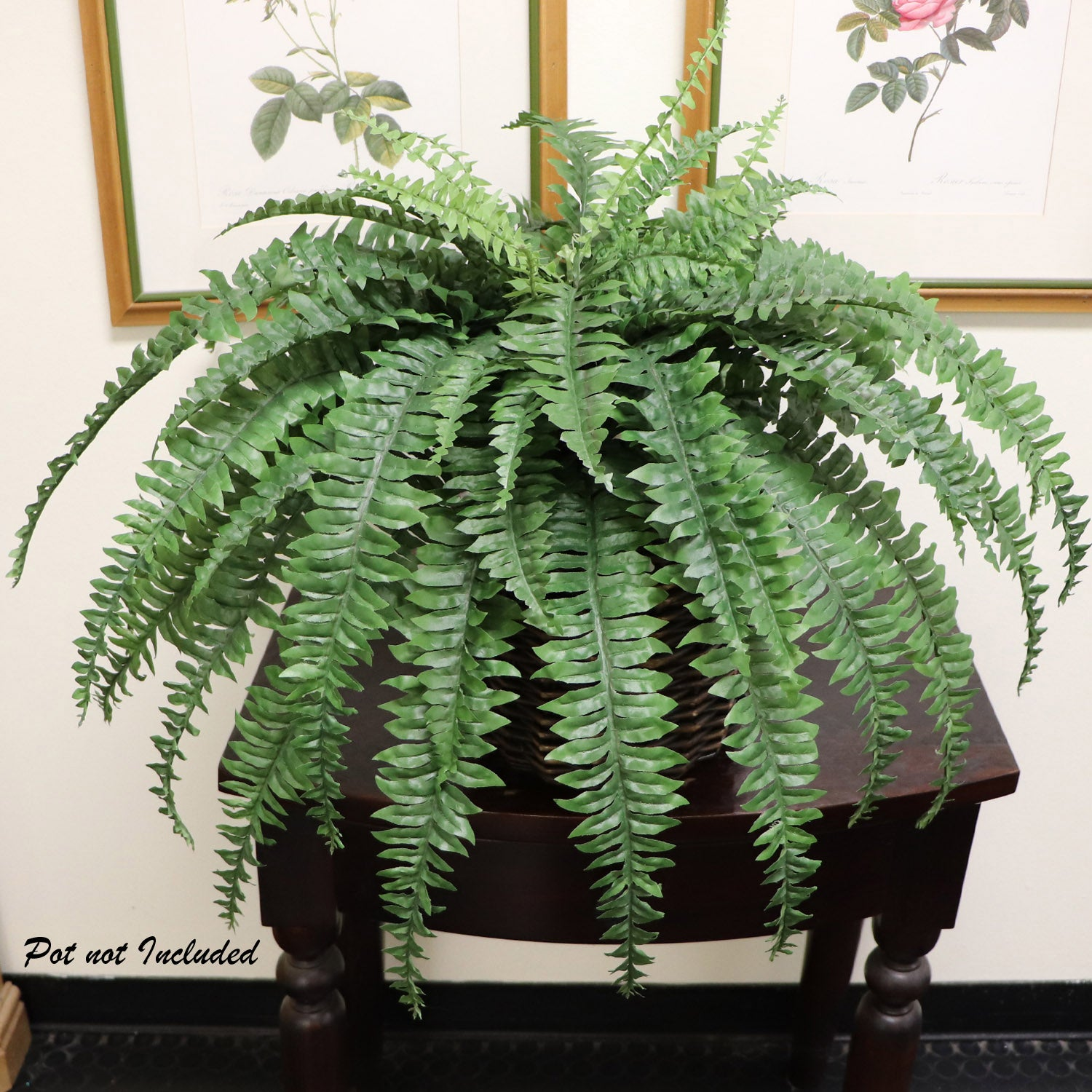 "Boston Fern Plant 48"" Wide 60 Fronds"