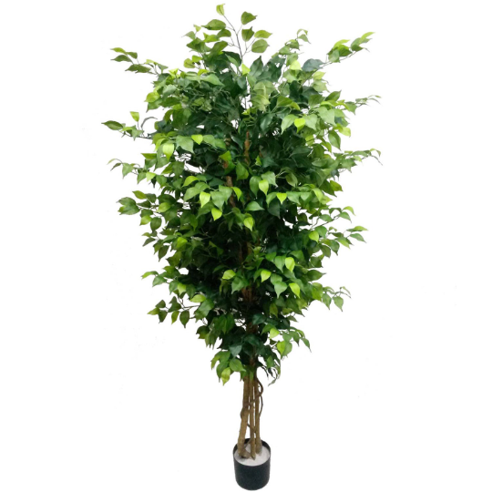 Silk Ficus Trees 6' w 1528 lvs in Black Pot