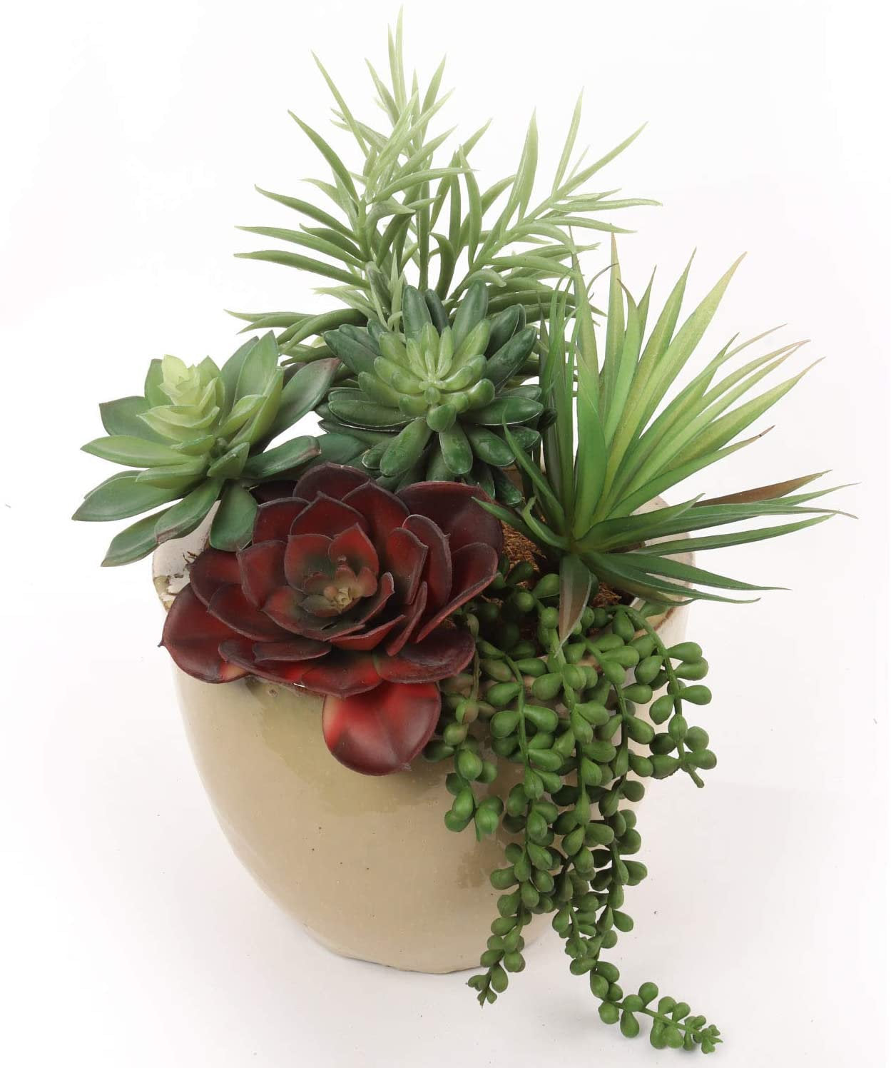 Succulent Assortment 6 Styles