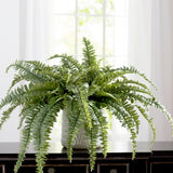 "Boston Fern Plant 48"" Wide 48 Fronds"