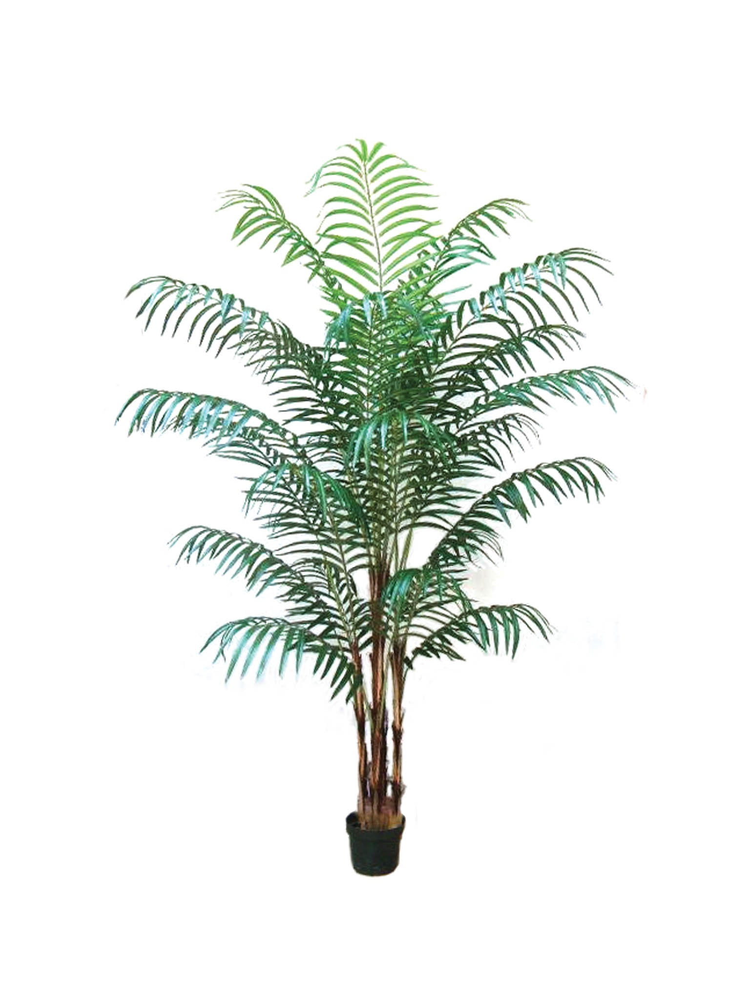 Areca Palm Tree 7' w 22 Fronds