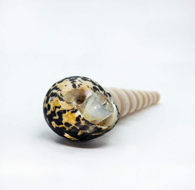 Black and White Seashell Pipe