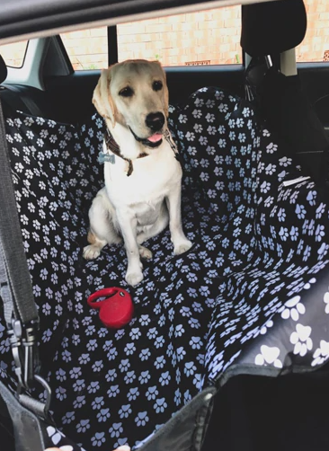 Clean Car- Dog Seat Cover