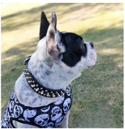 Get Punked Spiked Dog Collar