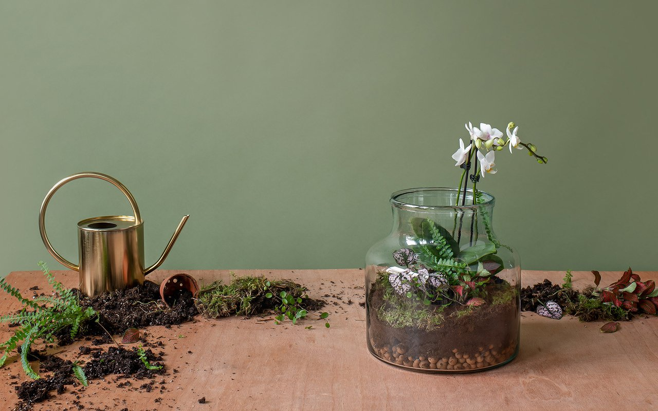 How To Make A Terrarium In 9 Simple Steps
