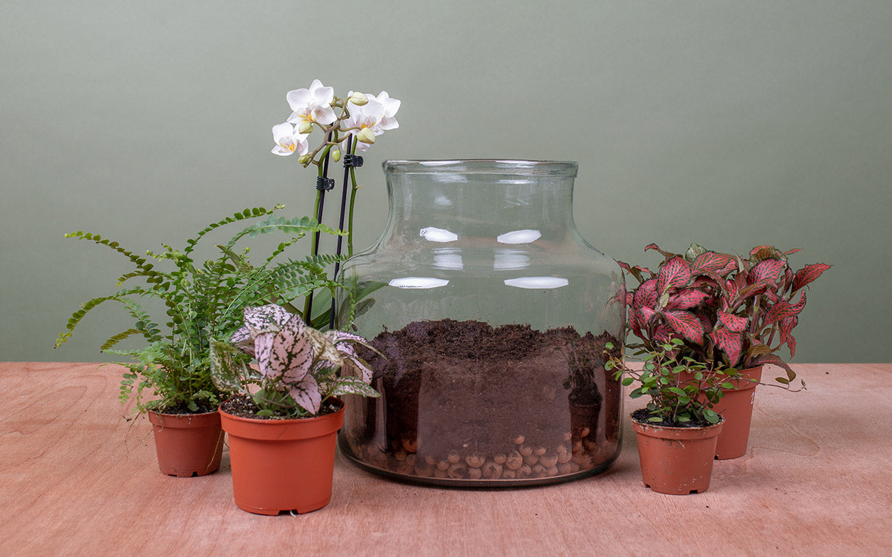 BLOG-terrarium-step4